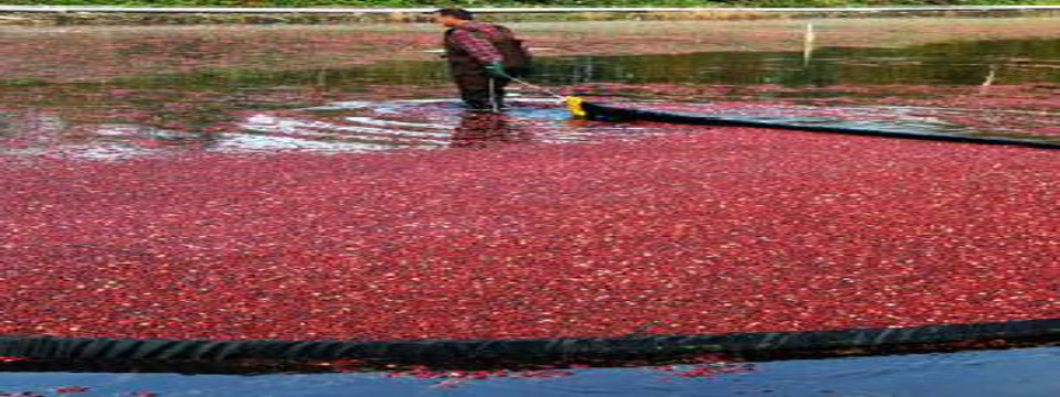 ocean spray environmental case study Ocean spray cranberries: environmental risk management is a harvard business (hbr) case study on global business , fern fort university provides hbr case study assignment help for just $11 our case solution is based on case study method expertise & our global insights.