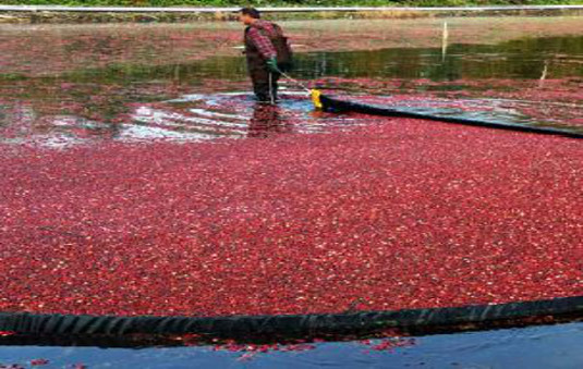 ocean spray cranberries inc case study Ocean spray cranberries, inc - part 2  according to a case study cited by staudt and stranz (2009), ocean spray cranberries, inc is an agricultural cooperative owned by more than 750 cranberry growers in the united states and canada.